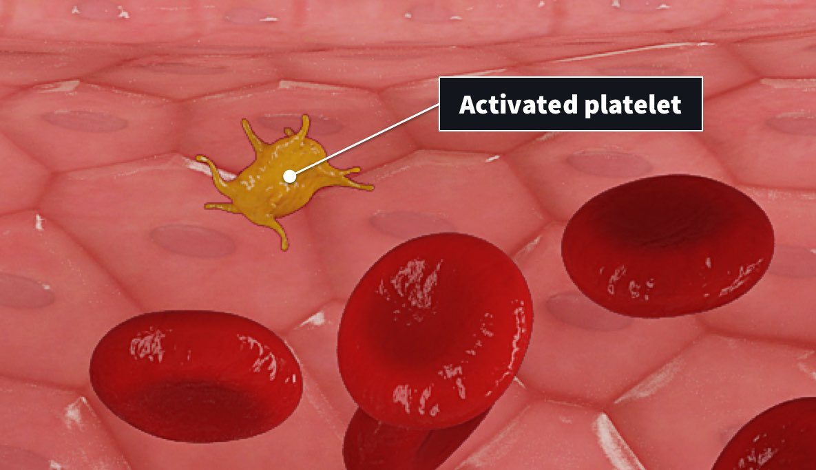 activated platelet