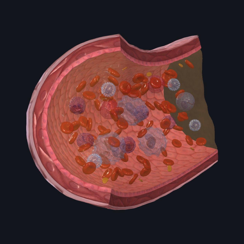 Blood microanatomy model