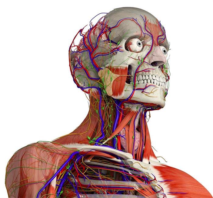 essential anatomy 5 hero